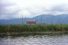 to Jpeg 56K 9809Q01 Floating gardens on Lake Inle, Shan State.