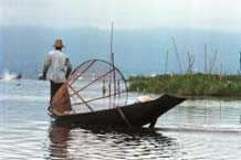 to Jpeg 41K 9809Q07 Intha fisherman on Lake Inle, Shan State.