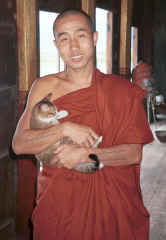 To Jpeg 23K A monk with one of his jumping cats at Nga Phe Kyaung monastery, Lake Inle, Shan State, Myanmar 9809Q14A.jpg