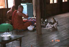 to Jpeg 26K Monks eating with their cats at Nga Phe Kyaung monastery, Lake Inle, Shan State, Myanmar 9809Q22.JPG