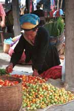 to 31K Jpeg 9809N19 Pa'O woman checking the tomatoes in Nampan 5-day rotating market, Lake Inle, Shan State. Note she has two towels on her head, not the usual one.