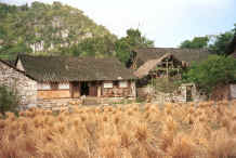 Jpeg 39K Traditional Bouyei houses set in the rice harvest landscape against a karst limestone outcrop which provides the stone building material - Bi Ke village, Mi Gu township, Zhenfeng county, Guizhou province 0010r27.jpg