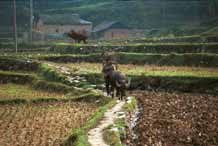 to Jpeg 50K  0110E27 Ploughing up the rice stubble in the fields around Gan He village, Ya Rong township, Huishui county, Guizhou province. This is a Qing Miao (or Bouyei/Miao) village as there has been much intermarriage and the costume is very mixed).