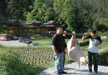to 71K Jpg image Gift of a fat pig being carried into the village