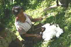 to 58K Jpeg 0181 Carding cotton - one of the weavers of Watublapi, Flores, who use homegrown cotton and natural dyes for their weaving, showing their traditional weaving skills (2004)