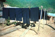 to Jpeg 30K Lengths of indigo dyed fabric drying in the sun in a Yao village in the hills around Chiang Rai 8812q07.jpg