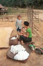 to Jpeg 38K Black Thai woman putting cotton bolls through a local equivalent of a cotton gin to remove the seeds at a house by the roadside on the way to Dien Bien Phu from Son La, Lai Chau Province 9510C35.JPG