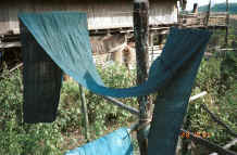 to Jpeg 41K Cotton fabric hanging out to dry and oxidise after being dyed in indigo.  Judging by the colour it still requires several more dips in the dye vat.  Black Thai village, Dien Bien Ph, Lai Chao Province. 9510E24.JPG