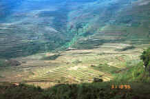 to Jpeg 37K Looking down onto the terraced fields with the rice harvest at the lower levels in the hills around Sa Pa, Lao Cai Province 9510J06.JPG