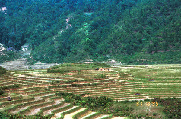 Jpeg 42K The terraced rice fields worked by the Black Hmong in the hills around Sa Pa, Lao Cai Province 9510K19.JPG